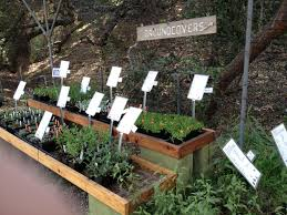 california native plant ground cover plants tag archive for