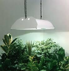 where to buy indoor grow lights growing indoor plants with grow lights
