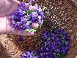 cuisine plantes sauvages plantes sauvages cueillette cuisine santé réseau ecole et nature