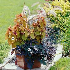Patio Potato Planters Can I Eat Sweet Potatoes From Ornamental Sweet Potato Vines That I