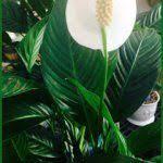 Lafayette Florist Office Plants At Work U2014 Photo Courtesy Brian Wheat Aaf Pfci Of