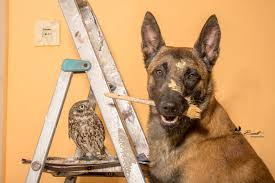 belgian shepherd owl a dog and a grumpy owl are best friends in these cute photos