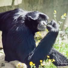 noah u0027s ark zoo farm on twitter