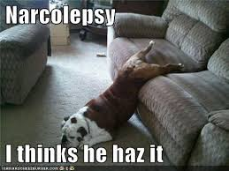 Narcolepsy Meme - amazing 26 best living with narcolepsy images on pinterest