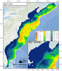 Map Of The Gulf Of Mexico by Ec Whale Month01 Abundance Map 300dpi Png