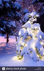 snow covered tree lit with white lights outside in
