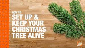 how to set up and keep your christmas tree alive youtube