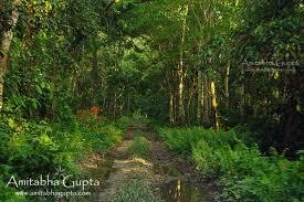 chilapata u2013 ideal destination jungle weekend u2013 amitabha gupta