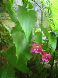 natureplus garden plants identification 4