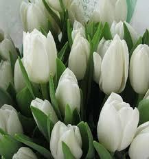 Fresh Cut Flowers Cheap Fresh Cut Tulip Flowers Wholesale Fresh Cut Tulip Flowers