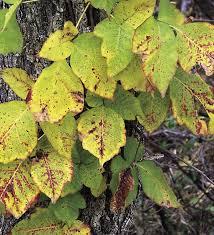 nature u0027s tp leaves