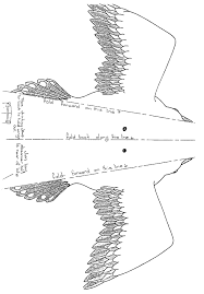 bird kite template google search dino camp pinterest kite