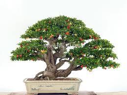 buy grosir tanaman buah dalam ruangan from china tanaman