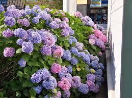 kansas native plant society good plants for shade in kansas city gardening pinterest