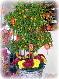 tet envelopes tet traditions and the lunar new year kumquat tree and recipes