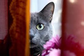 gatti divani con il tiragraffi per gatti fai da te il divano 礙 salvo
