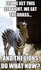 Me Time Meme - lesson zebra memes quickmeme