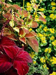 13 great red and yellow garden combos