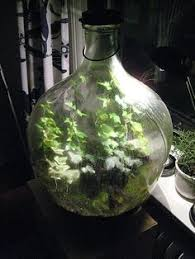 sealed bottle garden terrariums http www dailymail co uk sciencetech article 2267504
