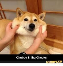 Shiba Meme - 25 best memes about spicy shiba inu spicy shiba inu memes