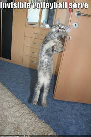 Invisible Cat Memes - invisible volleyball vball pinterest volleyball cat and animal