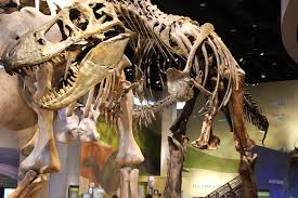 the world s largest dinosaurs roar into the perot museum in dallas