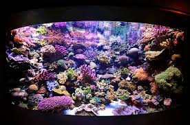 Reef Aquarium Lighting Daily And Weekly Coral Reef Tank Maintenance Schedule
