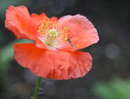 poppy u0026 poppy reviews seedratings com