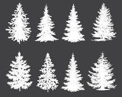 white pine tree pine tree graphics etsy