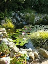 attract wildlife to your garden pond garden ponds ponds and shallow