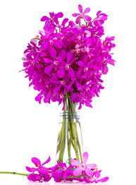 Purple Orchids Purple Orchids Bouquet In A Vase Royalty Free Stock Images