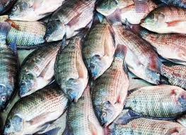 Barney U0027s Backyard Gang Barney by Backyard Fish Farming Raise Fish In Your Home Pond Worldwide
