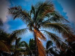 Palm Tree Wallpaper Palm Trees Oc 2048x1536 Wallpapers Pinterest Ipad Air