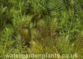 native plant fertiliser british native pond plants water garden plants