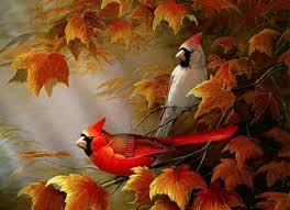 Cardinal Bird Home Decor by Cardinals Birds Autumn Cardinals Wallpapers Hd Wallpapers