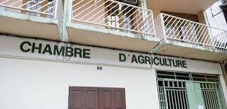 chambre d agriculture 01 la chambre d agriculture cultive sa dette journal guyane