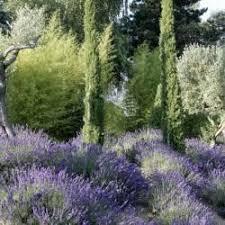 453 best garten images on pinterest beetroot flowers and garden