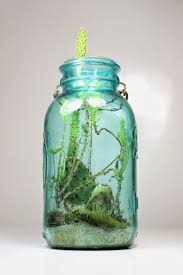 8 best mini florarium images on pinterest terrarium ideas