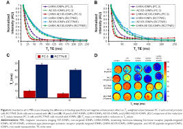 full text double receptor targeting multifunctional iron oxide