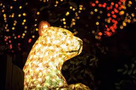 san antonio zoo lights coupon doseum san antonio preview modern tejana