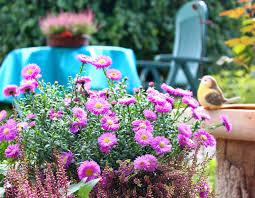 herbstbepflanzung balkon herbstbepflanzung für balkon und terrasse freizeitrevue de
