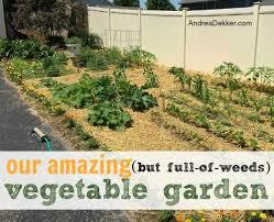 our amazing but full of weeds vegetable garden andrea dekker