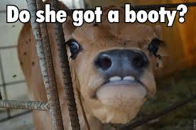 Do She Got A Booty Meme - do she got a booty album on imgur