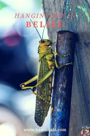 Luxury Homes In Belize by Best 25 Belize Resorts Ideas Only On Pinterest Maldives Villas