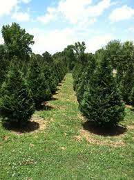 raulston acres tree farm