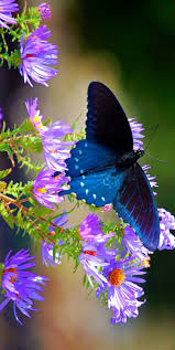 137 best butterflies on flowers images on pinterest butterflies