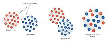 membranes i biology visionlearning