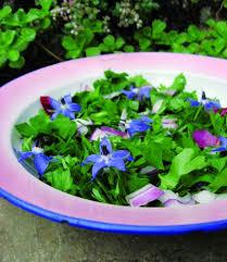 salade de persil plat et de bourrache cuisine créative recette de