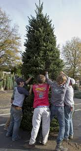 christmas trees are family business news greensboro com