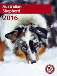 gewicht australian shepherd 7 monate trixie kalender australian shepherd amazon de haustier